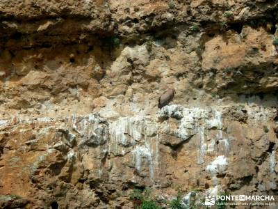 Piragüismo Hoces del Río Duratón,canoas; caminos de santiago ruta gredos